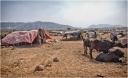 Desert Encampment